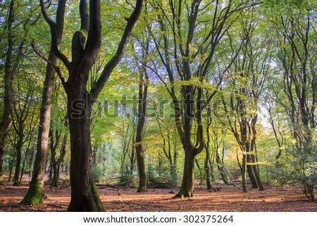 landscape forest with leaf trees and many foliage - stock photo