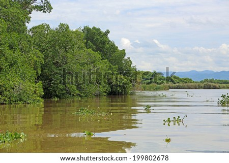 Landscape from Black River, Jamaica - stock photo