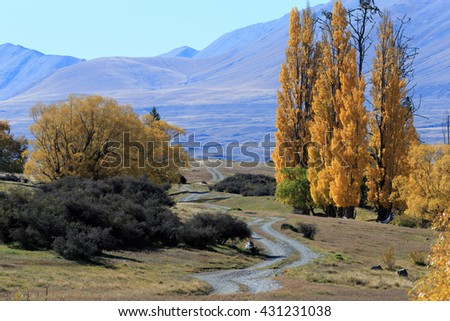 Landscape image of trees and mountains in the glacier valley in Canterbury, New Zealand.