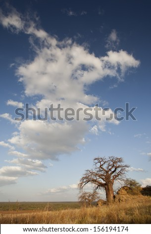 landscape image with boabab and clouds - stock photo