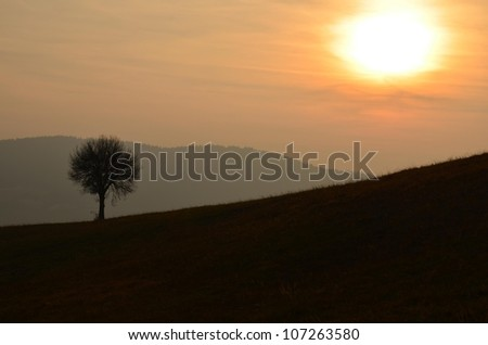 Landscape image with tree silhouette at sunset.