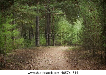 landscape in a pine forest in the spring with a wood footpath and beautiful trees - stock photo