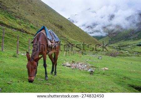 landscape in Andes.  Salkantay Trekking, Peru. - stock photo