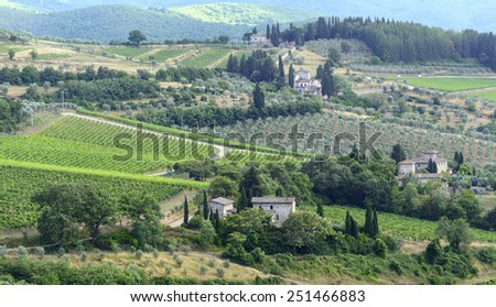 Landscape in Chianti (Florence, Tuscany, Italy) with vineyards and olive trees at summer