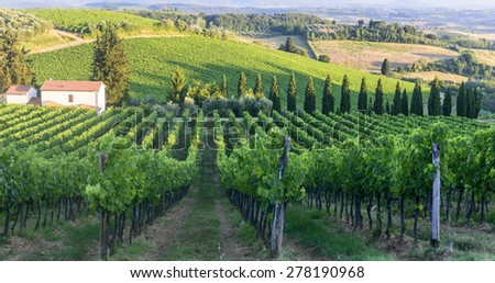 Landscape in Chianti (Florence, Tuscany, Italy) with vineyards at summer