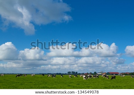 Landscape in Holland with cows on on farmland in the Netherlands - stock photo