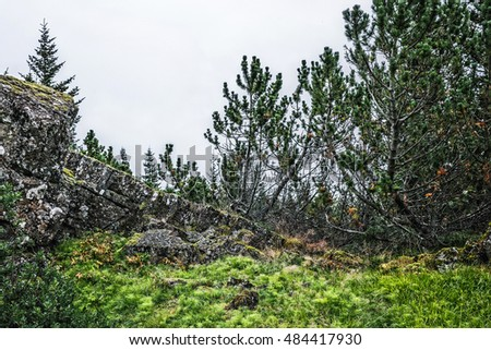 Landscape in Iceland, ?oniferous trees, rocks and green moss