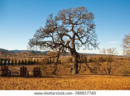 Landscape in Sonoma County, CA - stock photo