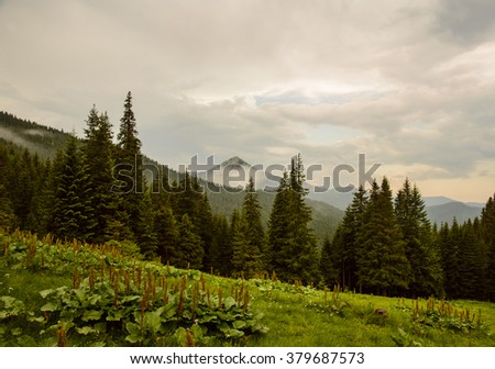 Landscape in the Carpathian mountains
