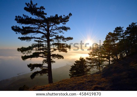Landscape in the mountains on the Black Sea coast at sunset. Silhouette of a large pine tree against of blue sky and radiant sun on horizon evening in January. - stock photo