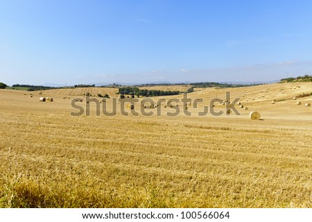 Landscape in Val di Chiana (Arezzo, Tuscany, Italy): cultivated fields at summer