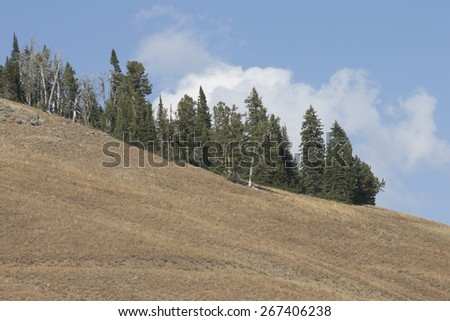 Landscape in Yellowstone National park - stock photo