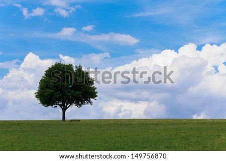 Landscape - lonely maple tree on green field, park bench - stock photo