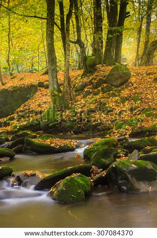 Landscape magic river in autumn forest at sunlight.  - stock photo
