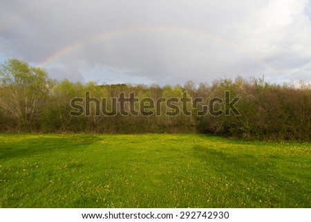 Landscape meadow and grove of willows and poplars with rainbow in the sky at sunset. In the foreground meadow with yellow flowers after a spring storm  - stock photo