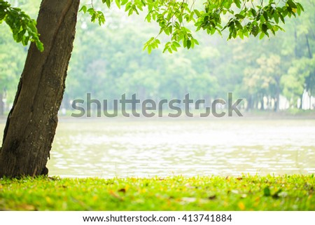 Landscape. Morning sun light with tree lake in the park. picture for add text and background. Image has shallow depth of field. - stock photo