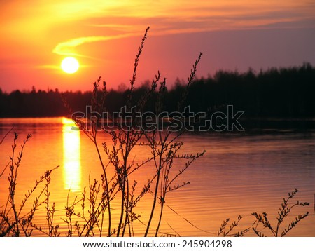Landscape nature. Forest and river at sunset.