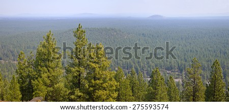 Landscape of a dense forest from Lava Butte in Central Oregon. - stock photo