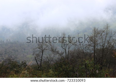Landscape of a misty forest with a dry trees