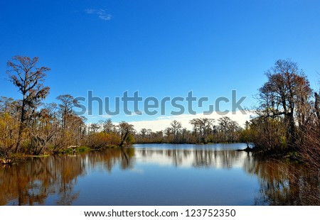 Landscape Of A South Louisiana Cypress Swamp - stock photo