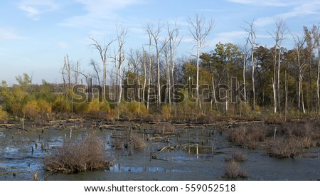 Landscape of a wetland area