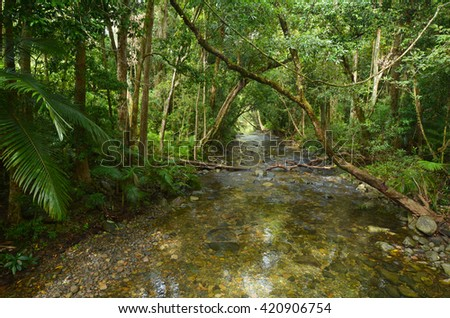 Landscape of a wild stream in Daintree National Park in the tropical north of Queensland, Australia, founded in 1981 and  became a World Heritage Site in1998. - stock photo
