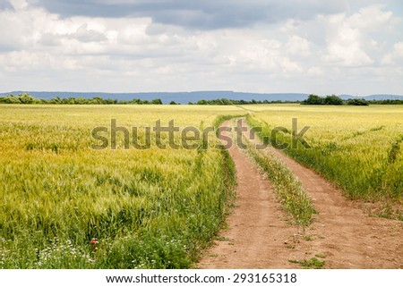 Landscape of agricultural land with wheat and dirt road with dramatic sky - stock photo