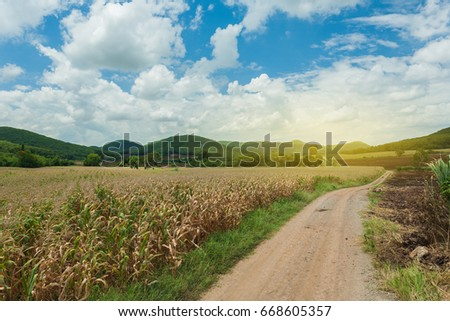 landscape of agriculture ,cornfield beautiful sky back ground.agribusiness concept