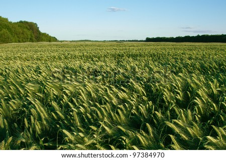landscape of barley field in early summer - stock photo