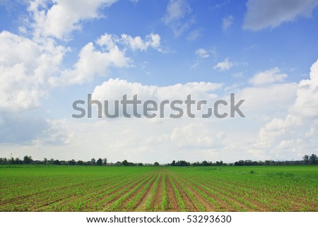 Landscape of beautiful corn field and blue  sky with some clouds in grandangle view