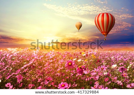 Landscape of beautiful cosmos flower field and hot air balloon on sky sunset, vintage and retro filter effect style - stock photo