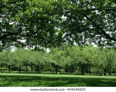 Brooklyn Botanic Garden Stock Images Royalty Free Images Vectors Shutterstock
