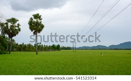 Landscape of countryside in Mekong Delta, Vietnam. Rice fields with palm trees at sunset.