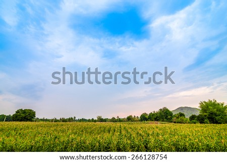 Landscape of crop harvest in Kanganaburee, a province of Thailand. - stock photo