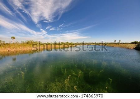 landscape of Everglades National Park showing underwater algae community - stock photo