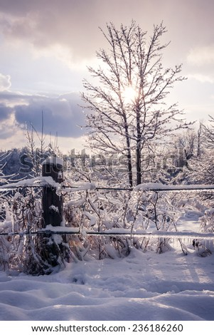 Landscape of fence, plants and trees covered in ice after snowstorm. Ontario, Canada. - stock photo