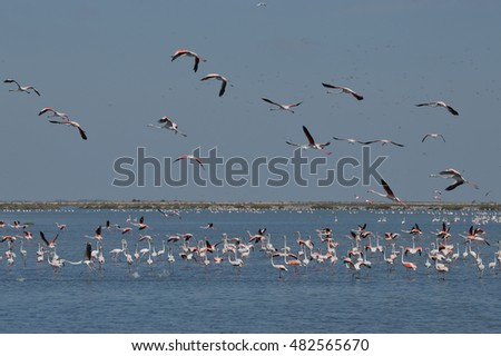 Landscape of flamingos