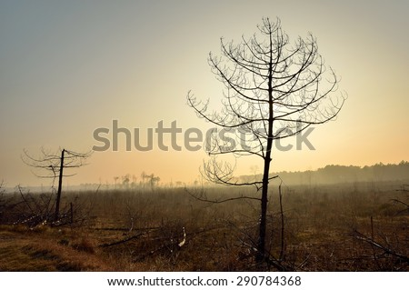 landscape of forest burned by fire in dante's beach, italy - stock photo