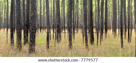 Landscape of forest for use as a background. - stock photo
