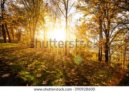 landscape of forest in morning in seattle
