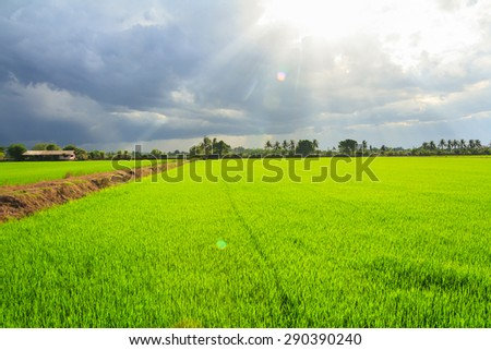 Landscape of green field with sun rays and lens flare - stock photo