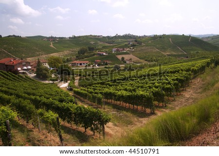 Landscape of green vines with grape over the hills