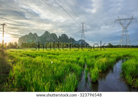 Landscape of High-voltage power line on cornfield - stock photo