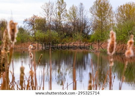 Landscape of lake and reeds. - stock photo