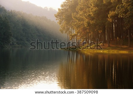 Landscape of lake - reflection of tree in a lake, landscape, background