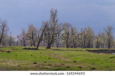 landscape of oak grove in the early spring and a cloudy sky on a sunny day