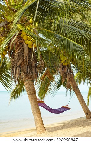 Landscape of palm trees with hammock in a bright sunny day.