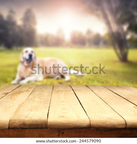landscape of park and dog with table of  free space for your dog food  - stock photo