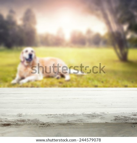 landscape of park and dog with vintage white table of  free space for your dog food  - stock photo