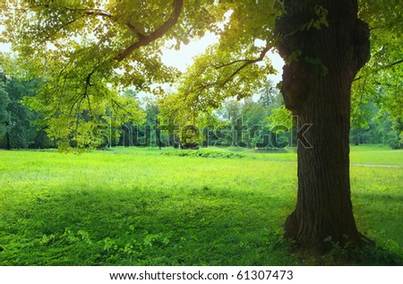 Landscape of park at summertime - stock photo